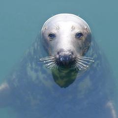 seal (thumbnail)